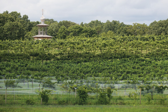 View of the Russian Chapel Hills Vineyard